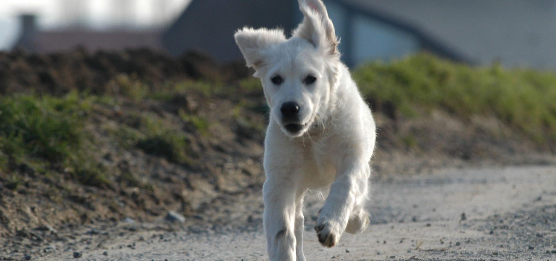 running-dog-1402704-1919x1275